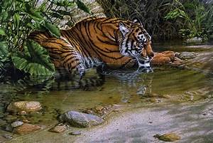 Jungle Animals Real Life HD Wallpapers | Big Cat Tattoos ...