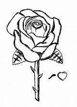 Rose Coloring Roses Colorare Disegni Stampare Tattoo Printable Tatuaggi Rosa Immagini Copiare Gratis Rosen Sketch Fiori Facili Immagine Tipi Disegnare sketch template