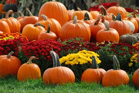 pumpkins and fall pictures pumpkin patch best fresh christmas trees