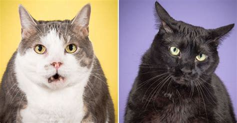 photographer takes delightful fat cat pictures  show