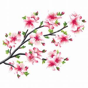 Fleur De Cerisier Signification : cerisier japonais une branche des fleurs de cerisier roses ~ Melissatoandfro.com Idées de Décoration