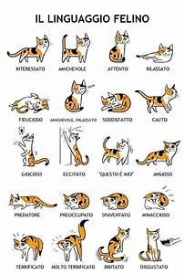 Ecco 25 utilissime dritte sul mondo felino che renderanno