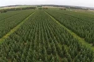 Amazing footage captures UK's largest Christmas tree farm ...