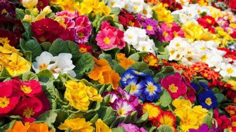 ¿Sabías que estas 4 plantas florecen mejor en primavera?