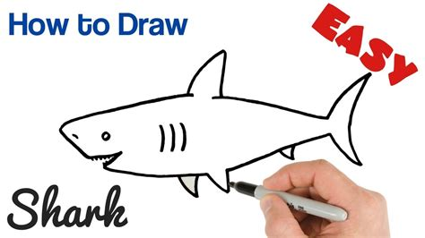 draw  shark easy step  step youtube