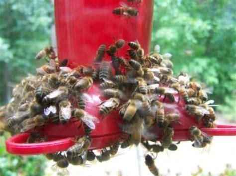 keeping bees    hummingbird feeder thriftyfun