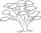 Tree Oak Clipart Outline Coloring Clip Line Cliparts Sweetclipart Drawing Trees Pages Clipground Clipartlook Library Tattoo Bl Pattern Icons sketch template