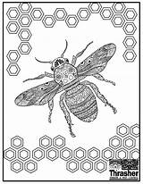 Bee Coloring Pages Sheet Thrasher Attitudes Termite Pest Control Template sketch template
