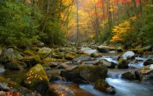Nature, Forest, River, Wallpapers, Hd, Desktop, And, Mobile, Backgrounds