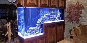 Plexiglas Aquarium Nach Maß : acrylic aquarium best tank for you the aquarium guide ~ Watch28wear.com Haus und Dekorationen