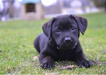 Breeds Dog Popular Puppies America Stacker Puppy
