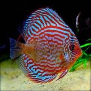 Aquarium Fish Plants & Accessories Arizona Aquatic Gardens