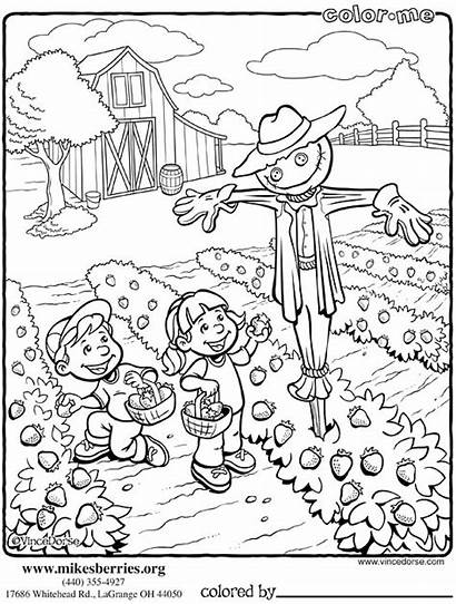 Coloring Pages Farm Garden Vegetable Scarecrows Berries