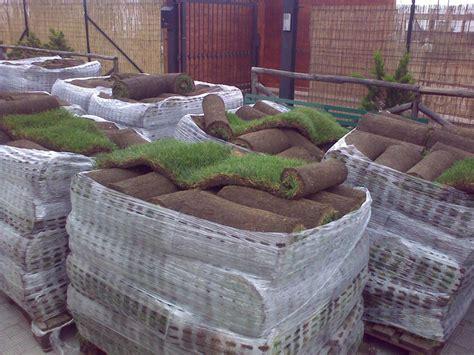 tappeto erboso a rotoli prato erboso prodotto e servizi