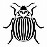 Beetle Potato Illustrations Clip Silhouette sketch template