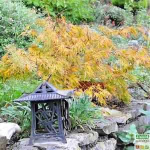 Plante Pour Jardin Japonais : comment faire un jardin japonais chez soi jardipartage ~ Dode.kayakingforconservation.com Idées de Décoration