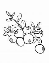 Blueberry Coloring Printable Sheet Template Pdf Blueberries Coloringcafe Drawing Templates Fruits Boyama Vegetables Sketch Button Standard Prints Getcolorings Below sketch template