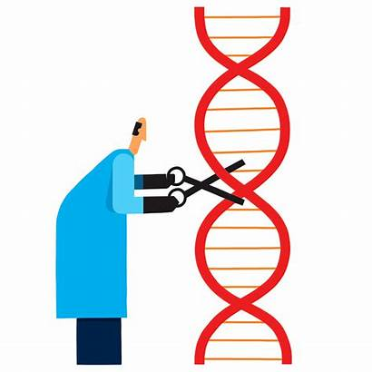 Restriction Enzymes Discovery Illustration Innovation Smith Hamilton