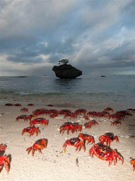 christmas island adventure redfern adventures