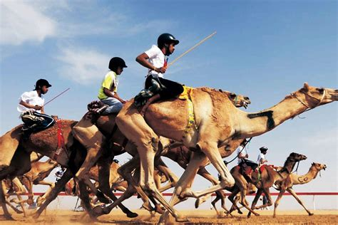 horses karachi race faster camels than camel narcotics compete seaview participants pakistan anti force beach 65km hour running per crop
