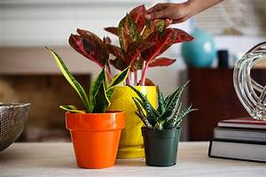 The, Best, Indoor, Plants, To, Bring, The, Outside, In
