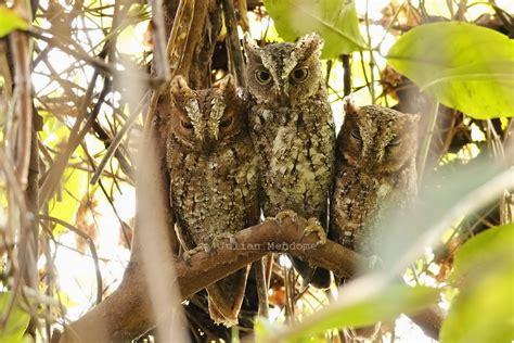 tangkoko wildlife