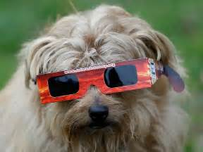 Dog with Solar Eclipse Glasses
