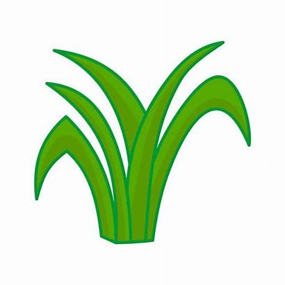 Rumput Grass Kartun Cartoon Gambar Daun Vektor