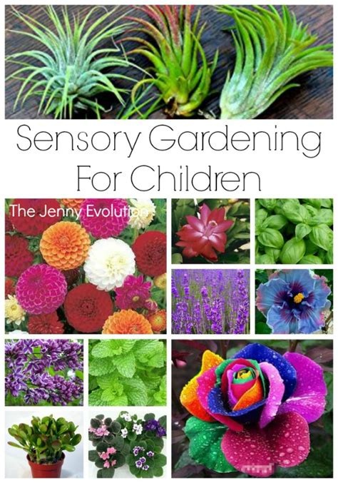 sensory garden ideas  children mommy evolution