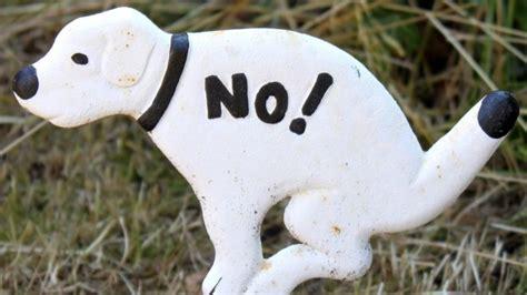 hundekot im garten was tun gegen hunde und katzenkot frag mutti
