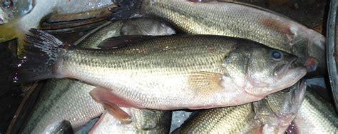 Kenyans Get Hooked To China Fish