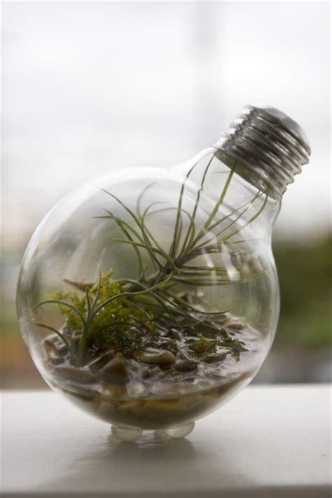 incandescents find second as light bulb terrarium