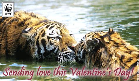 valentine wwf  ecards world wildlife fund