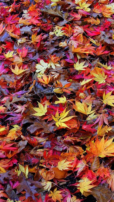 Fall Themed Wallpaper Iphone by Free Fall Iphone Hd Wallpapers Page 2 Of 3 Wallpaper Wiki