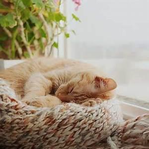 Katze Kotzt Viel : wie viel schlaf brauchen katzen tierisch wohnen ~ Frokenaadalensverden.com Haus und Dekorationen