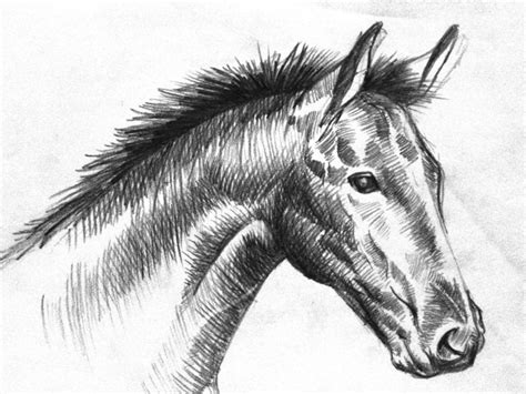 animals wallpapers black  white horse drawings