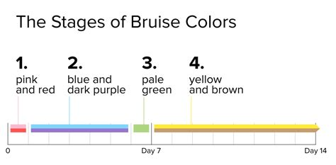 why do bruises change color why do my bruises so many different colors