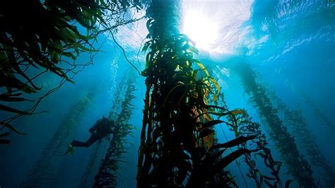 australia diving information scuba diving resource