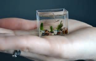 russian artist anatoly konenko creates world s smallest aquarium daily mail