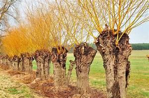 Weiden Schneiden Erlaubt : grasgefl ster wenn der frost beendet ist k nnen die weiden geschnitten werden ~ Watch28wear.com Haus und Dekorationen