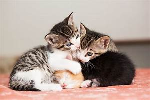 Balkonschutz Für Katzen : allergiker katzen hunde co diese haustiere sind geeignet ~ Eleganceandgraceweddings.com Haus und Dekorationen