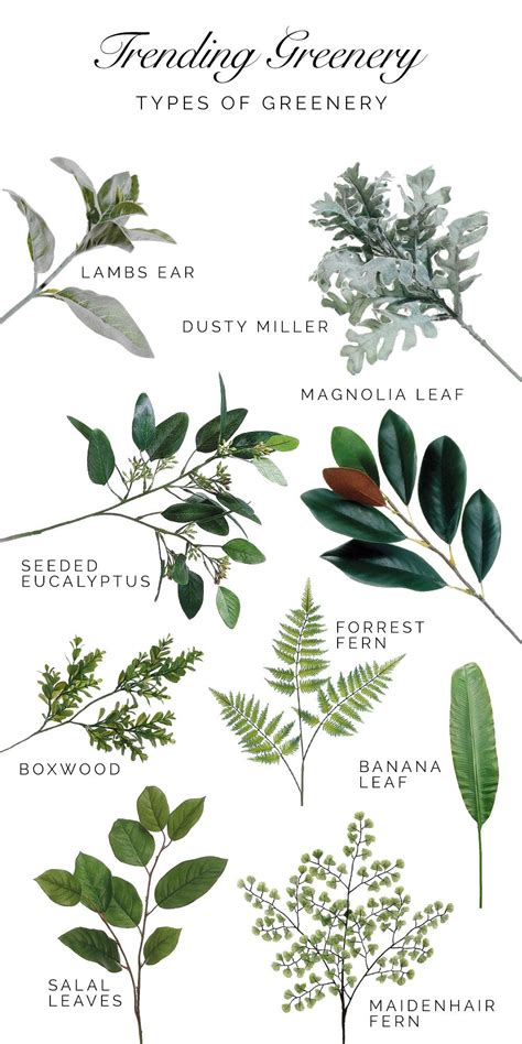 A Guide To Trending Greenery Types Of Greenery That Are