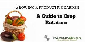 A Guide To Crop Rotation