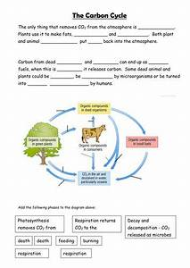 Biogeochemical Cycles Worksheet Answer Key
