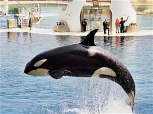 Vitesse Des Animaux : l 39 orque les animaux marins les plus rapides du monde ~ Medecine-chirurgie-esthetiques.com Avis de Voitures