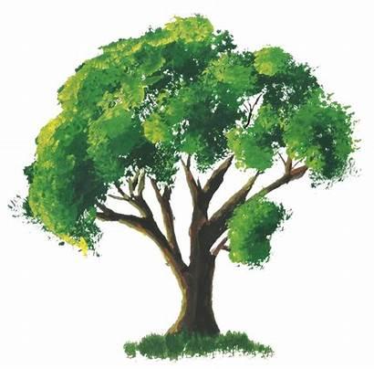 Watercolor Trees Beginners Tree Easy Painting Paintings