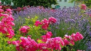 Lavendel Im Topf überwintern : echter lavendel duftlavendel pflege schneiden wichtige tipps ~ Frokenaadalensverden.com Haus und Dekorationen