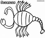 Scorpion Coloring Pages sketch template