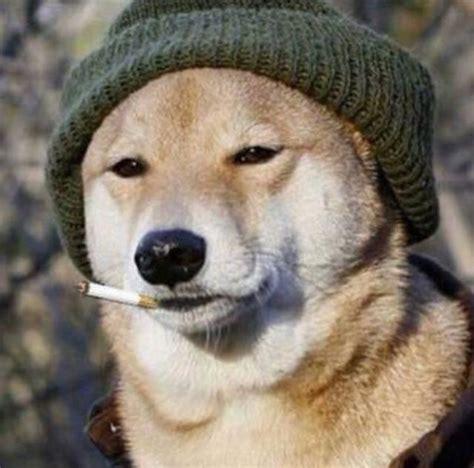 👷🏼♂️⛏ : dogecoin
