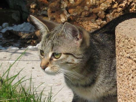 junger kater durchfall hillmealcom